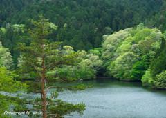 新緑の三河湖