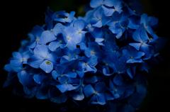 水の色に染まる花