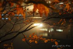 ライトアップな風景