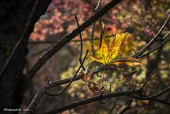 秋ですね~