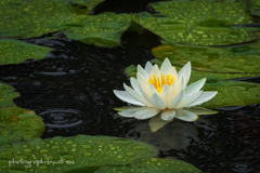 雨に咲く花1