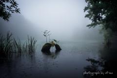 雨霧の水辺