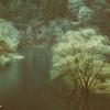 小雨にむせぶ木々