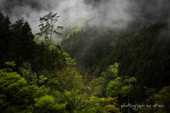 霧雨の風景