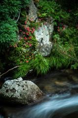 渓流の赤い花