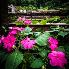 橋のたもとに咲いていた花