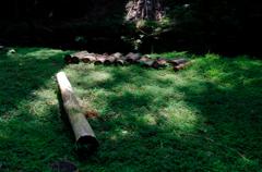 夏色の木陰