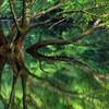 樹の生命力