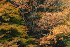 秋の衣を纏う The Tree