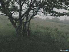 寂しい風景