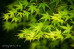 新緑に魅せられて・・・