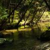 春の小川はさらさら行っていました。