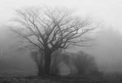 雲の中の木