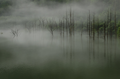 雨と霧と立ち枯れの水面