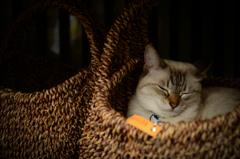 眠れる籠の猫