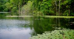 名もなき池の風景