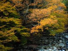 晩秋の貫禄