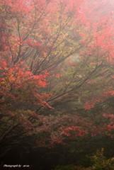 霧にかすむ紅葉