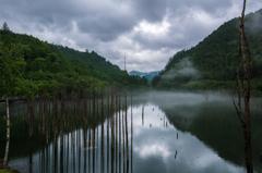 雨の自然湖5