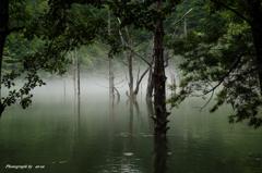 雨の自然湖