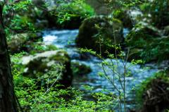 ある春の日の渓流