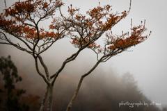 雨雲の中の秋