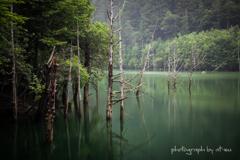 雨の自然湖2