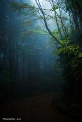 霧雨を行く