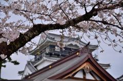 お城と言ったら桜でしょう