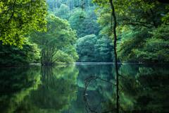 垂れ下がる枝と静かな湖面