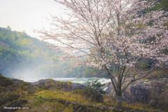 寒狭峡の桜