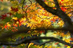 逆光の秋彩2