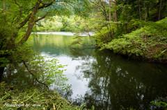 湖の入り江