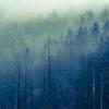 静かな森の静かな雨