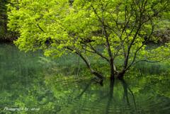 新緑の時間