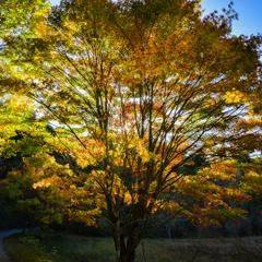 逆光の秋彩