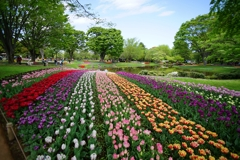広角18㎜の昭和記念公園2