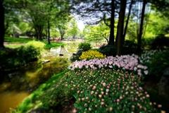 昭和記念公園はアルコール持ち込み禁止