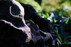 御苑で化石発掘