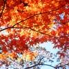 そこのアナタ 秋ですよ 秋 ^^