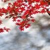 紅葉 実篤の庭