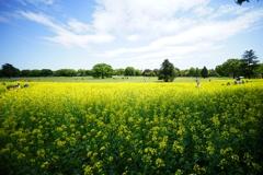 広角18㎜の昭和記念公園