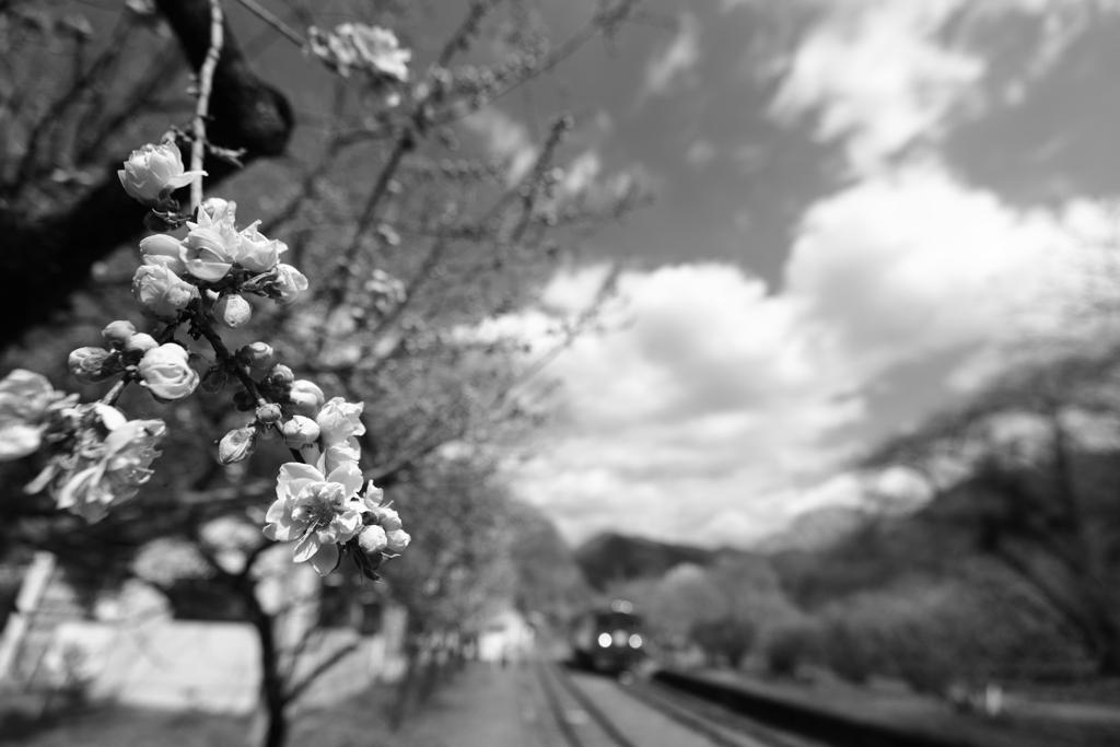 花桃と青空と