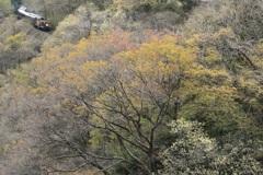 春紅葉の季節 2