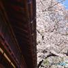 法華寺の巨桜