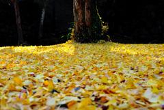 晩秋の絨毯