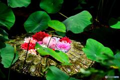 岡寺の華の池