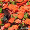 はじめての蝶