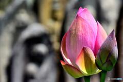 喜光寺の石仏と蓮