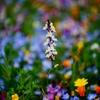 花の色は・・・